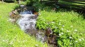 narrow stream with rocks and green lawn on both sides Stock Footage