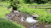 the rapid flow of pure mountain stream in a green grass near the wooden fence Stock Footage