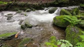 wild : small cascades on the forest river among huge boulders covered with moss