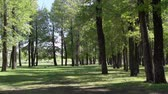 A sunny day in a green forest. Shadows from the trees on the grass. Stock Footage