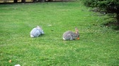 králíček : Two rabbits are sitting on the grass. Dostupné videozáznamy