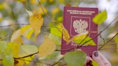 Russian passport and birch leaves