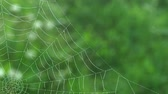 shaky : Spider Web In Nature Surrounding Stock Footage