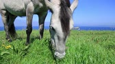 animal : Horse alone on a lawn eating grass