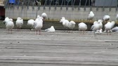 wing : seagulls on the pier Stock Footage