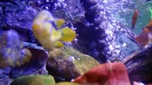 korallenfisch : buntes aquarium Stock Footage