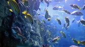 глубина : beautiful underwater scene with colorful fishes Стоковые видеозаписи