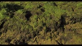 spinacz : Green seaweed world near the ocean with macro landscape Wideo