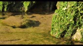 theme : Green seaweed world near the ocean with macro landscape Stock Footage