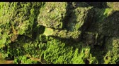 alga : Green seaweed world near the ocean with macro landscape Stock Footage