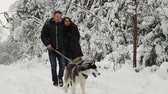 male animal : A happy married couple being in the winter pine forest walks with beautiful black-pain Siberian Husky. They are soothing and joyful on peoples faces.