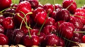 perto : Fresh, ripe, juicy cherries rotate. Red cherry clockwise