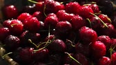 bereket : Red ripe sweet cherries close-up with drops of water in the basket on the grass Stok Video