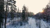 dusk forest : Aerial footage of flying between beautiful snowy trees in the middle of wilderness in Lapland Finland. Stock Footage