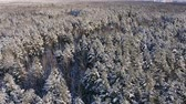 powder snow : Aerial photo of a winter forest. flying over the snowy forests of the sun sets orange over the white trees. Frosty morning. Winter landscape