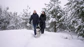 ハスキー : Man and woman have fun walking with Siberian husky in winter forest playing and throwing snow 動画素材