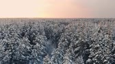 helicopter view : Drone video of forest in Finnish Lapland, above the Arctic Circle in winter Stock Footage
