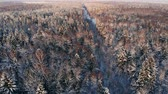 glacé : AERIAL CLOSE UP Flying over frozen treetops in snowy mixed forest at misty sunrise. Golden sun rising behind icy mixed forest wrapped in morning fog and snow in cold winter. Stunning winter landscape Stock Footage