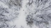kocogás : A man and a woman run in the winter through the woods training and doing their health. Morning Jogging, healthy lifestyle. Aerial