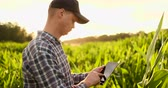 authentisch : Farmer agronomist with tablet computer in bare empty field in sunset, serious confident man using modern technology in agricultural production planning and preparation. Videos