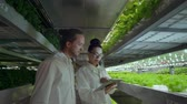 raflar : Modern vertical farming system and its employees taking care of plants. Plant food production in vertically stacked layers