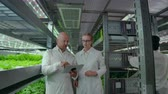 místní : A group of engineers in white coats walk on the modern vertical farm of the future with laptops and tablets in their hands studying and discussing the results of the growth of green plants.