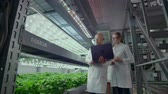 rúcula : Scientists in white coats with a laptop and a tablet on a vertical farm with hydroponics make research data on vegetables in the data center for the analysis and programming of watering plants