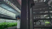 informatico : A group of people in white coats with a laptop and a tablet on a hydroponic farm contribute research data on vegetables to the data center for analysis and programming of plant irrigation