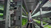 hidro : Hydroponics method of growing salad in greenhouse. Four lab assistants examine verdant plant growing. Agricultural. Industry Vídeos