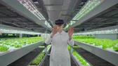 informatico : Vertical hydroponics plantation a woman in a white coat uses virtual reality technologies simulating the operation of the interface