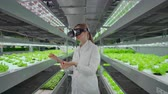 informatico : Modern woman microbiologist use virtual reality glasses to control and control the climate on a modern farm to grow eco-friendly vegetables.
