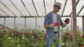 flowerpot : Two happy farmers working in a greenhouse with flowers using tablet computers to monitor and record crops for buyers and suppliers of flowers to shops, a small business, and colleagues working Stock Footage