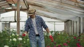horticultura : A male gardener is walking through a greenhouse with gloves looking and controlling the roses grown for his small business. Florist walks on a greenhouse and touches flowers with his hands.