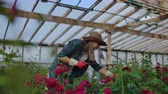 collega : Modern rose farmers walk through the greenhouse with a plantation of flowers, touch the buds and touch the screen of the tablet