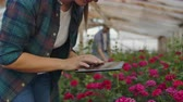 flowerpot : A woman with a tablet examines the flowers and presses her fingers on the tablet screen. Flower farming business checking flowers in greenhouse.