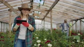 collega : Team work of colleagues modern rose farmers walk through the greenhouse with a plantation of flowers, touch the buds and touch the screen of the tablet