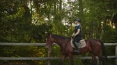 eyer : Quiet morning in the forest with horse Stok Video