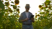 pléd : The biology teacher walks on the sunflowers field in nature