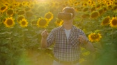 immersive : A progressive modern farmer in a field with sunflowers uses VR technology. Simulating the applications user interface. Control the irrigation system with drones. Inspect the field using drones