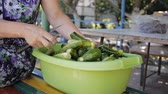 pepinos : Hands of woman washing cucumbers in the yard. Home canning. Vídeos