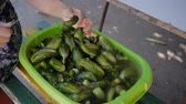 pepinos : The hands of rural women stirred, washed tasty green cucumbers in plastic basin with water. Cut off ends of cucumbers before pickling. Preparation of fresh cucumbers to pickle in the village.