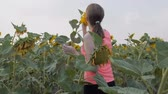 girassol : The woman in the field of sunflowers. Girl is touching sunflowers on the field on a sunny day. Slow motion.