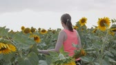 girassol : White girl walking through the yellow sunflowers on the field. She gently pushes the stalks of sunflowers with her hands. Harvest. Slow motion.