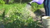 agronomist : watering the beds in slow mo on a Sunny day ,close-up