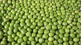 Green peas. Pea grains rotating pattern macro texture background backdrop footage video. Vídeos