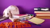 tankönyv : School education start september books and bunny. Stock mozgókép