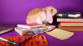 lop : School education start september books and bunny. Stock Footage