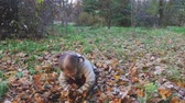 coat : Baby playing with leaves outdoor. Autumn forest, park.