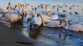 Beautiful swans and seagulls in the blue sea Stock mozgókép