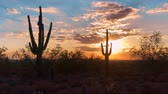 estância termal : Scottsdale Arizona desert sunset